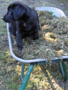 Emma bei der Gartenarbeit
