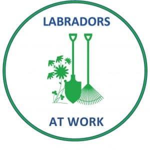 LABRADORS AR WORK