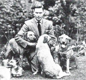 King George VI mit Labradors