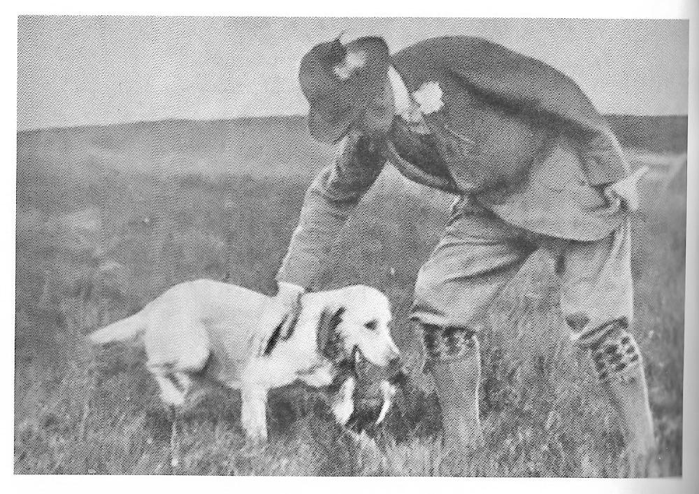 Lord Lonsdale - The Labrador Retriever Club (LRC)
