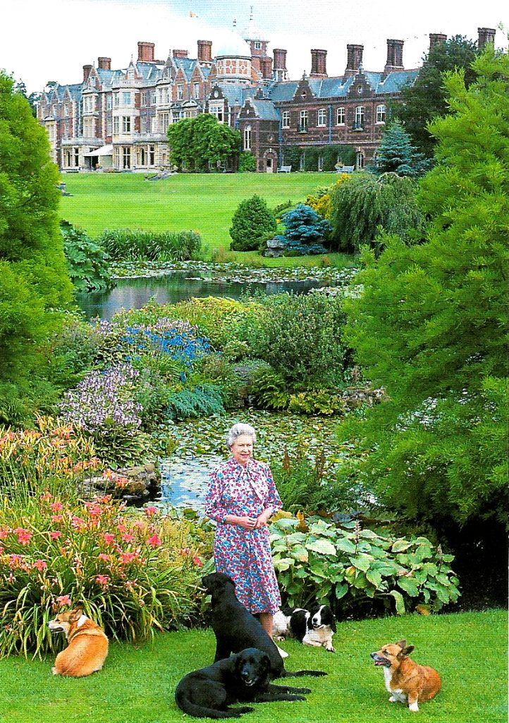 Postkarte HM The Queen with some of her dogs in the grounds of Sandringham House