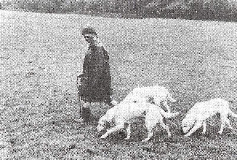 Zelstone Labradors Mrs Audrey Radclyffe mit Zelstone Diver, Cris und Mist